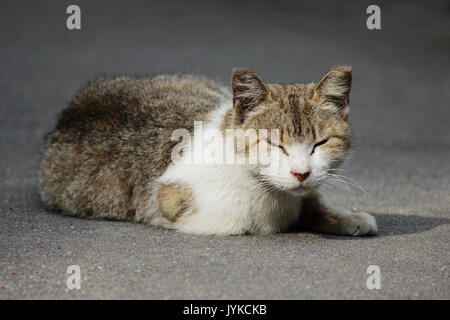 A homeless cat with frostbitten ears sits on the street in the summer - Stock Photo