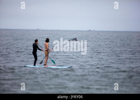 A Humpback Whale surfaces near a paddle boarder on the coast of California - Stock Photo