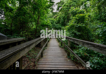 Boardwalk trail on Currituck Banks North Carolina National Estuarine Research Reserve - Stock Photo
