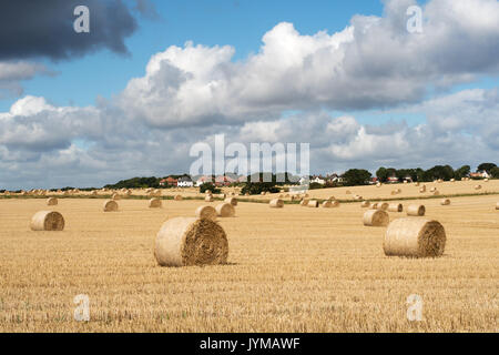 Field with hay bales after harvest, Whitburn, South Tyneside, England, UK - Stock Photo