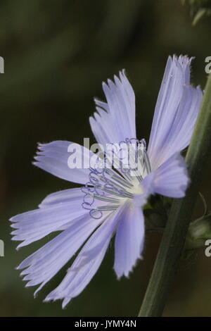 Purple flower with center detail; macro - Stock Photo