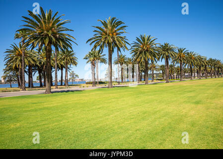 Palm trees along Riverside Drive in Perth, Langley Park, Western Australia - Stock Photo