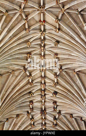 A view of the vaulting and bosses on the ceiling of the nave in the Anglican Cathedral in the City of Norwich, Norfolk, - Stock Photo