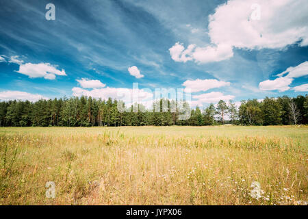 Landscape With Beautiful Summer Coniferous Forest Under Blue Sunny Sky. Nobody. Russian Nature Landscape - Stock Photo