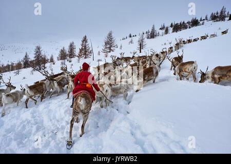 Mongolia, Khovsgol privince, the Tsaatan, reindeer herder, winter migration, transhumance - Stock Photo