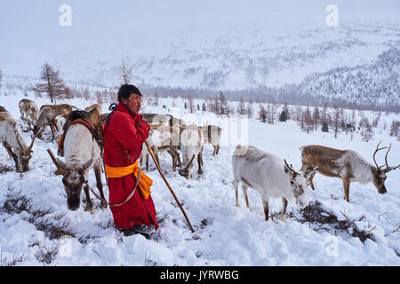 Mongolia, Khovsgol privince, the Tsaatan, reindeer herder, the winter transhumance, young man crying to call his - Stock Photo