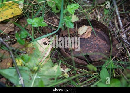 old rusty tin can in the green grass in the forest. - Stock Photo