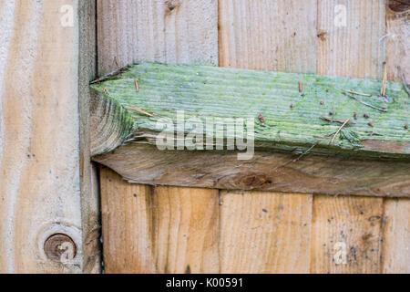 Natural Wooden Garden Fence Panel Construction - Stock Photo