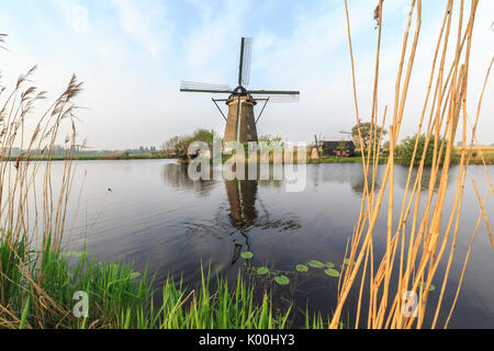 Green grass and reedbeds  frame the windmills reflected in the canal  Kinderdijk Rotterdam South Holland Netherlands - Stock Photo