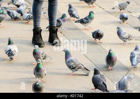 A woman stands on a footpath with pigeons at her feet - Stock Photo