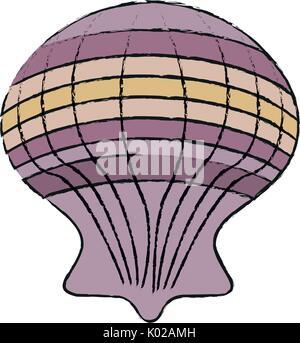 seashell vector illustration - Stock Photo