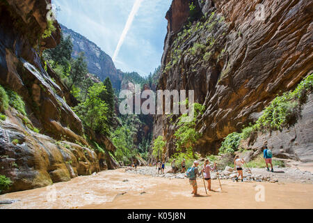 Tourists walk the narrow slot canyon gorge, the narrows in Zion National Park, Utah, USA, using poles to help them - Stock Photo