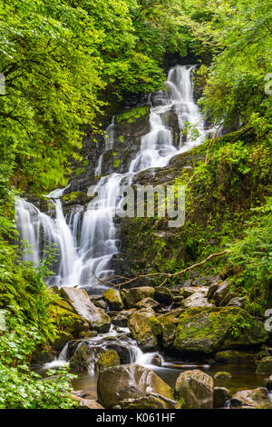 Torc Waterfall is a waterfall at the base of Torc Mountain, about 8.0 km from Killarney in County Kerry, Ireland - Stock Photo
