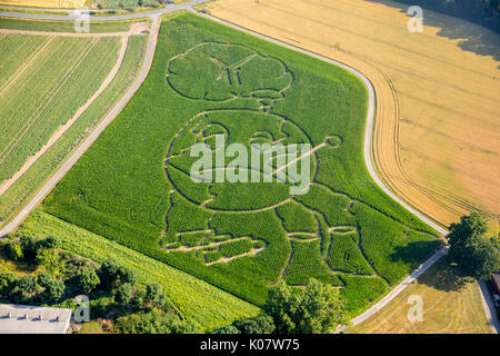 Corn maze, global warming, Selm, Ruhr area, North Rhine-Westphalia, Germany - Stock Photo