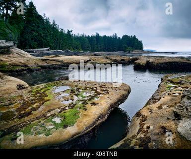Beautiful landscape and tide pools at Botanical Beach Juan de Fuca Provincial Park shoreline scenery, Port Renfrew, - Stock Photo