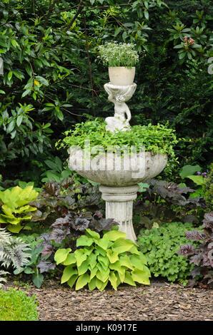 Alumroots (Heuchera) and plantain lilies (Hosta) at a fountain. Design: Marianne and Detlef Lüdke - Stock Photo