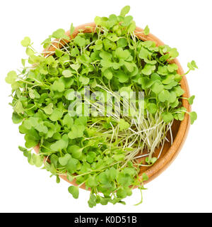 Rocket Salad Sprouts In Wooden Bowl Leaves And Cotyledons Of Eruca Sativa Also Arugula