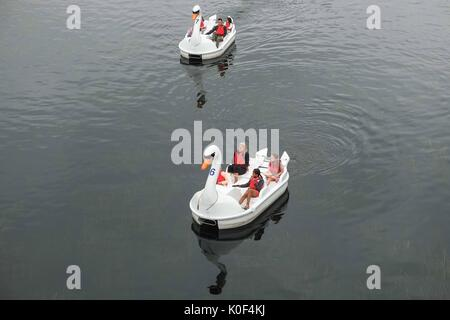 London, UK. 23rd August, 2017. Visiters enjoy the swan shaped pedalos on a humid and overcast day at the Queen Elizabeth - Stock Photo