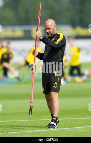 Trainer Peter BOSZ (DO) steckt seine Hindernisse,  Fussball 1. Bundesliga, Training, Borussia Dortmund (DO) am 22.08.2017 - Stock Photo