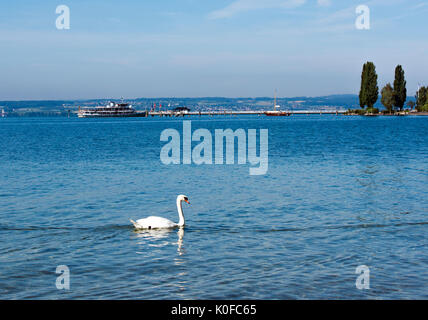 A swan and passenger ship on Lake Constance near Immenstaad - Immenstaad, Lake Constance, Baden-Wuerttemberg, Germany, - Stock Photo