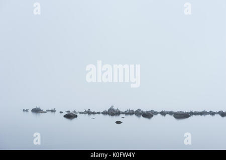 Rocky beach, great black cormorant, seagulls, and morning fog in summer. Sea, mist, birds, coast, seaside natural - Stock Photo