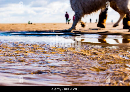 Dog Walking on the beach - Stock Photo