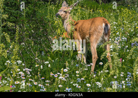Deer among Wildflowers in Mountain - Stock Photo