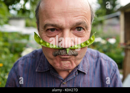 An elderly man is fooling around. He holds a pea pod near his face like a mustache - Stock Photo