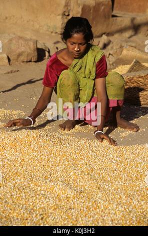 Saora tribal girl with dried corn, Odisha (Orissa), India - Stock Photo