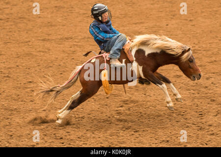 Rodeo Bareback Riding Stock Photo 74229118 Alamy