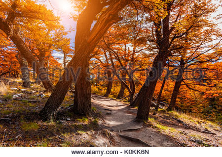 Path in the autumn forest. Patagonia, Argentina - Stock Photo