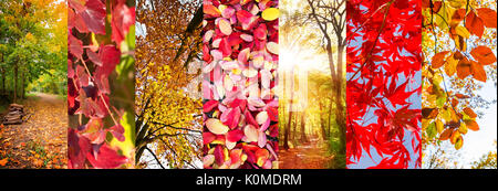 Autumn leaves and nature landscapes panoramic collage, fall concept - Stock Photo