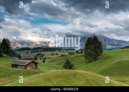 Alpe di Siusi/Seiser Alm, Dolomites, South Tyrol, Italy. View from the Alpe di Siusi to the peaks of Sassolungo/Langkofel - Stock Photo