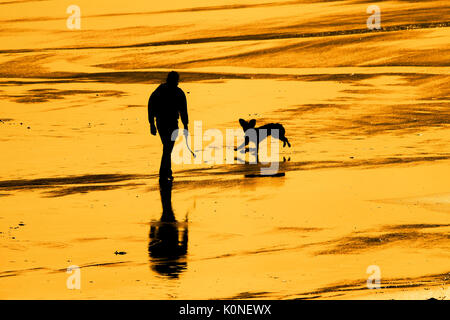 The silhouette of a man walking with his dog on a beach at sunset. - Stock Photo