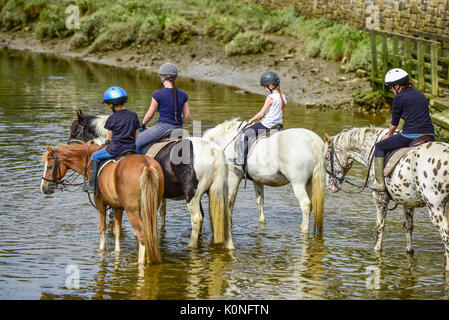 Pony trekking along the Gannel River and tidal estuary in Newquay in Cornwall. - Stock Photo