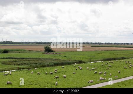 Sheep on the dike near the North Sea - Stock Photo