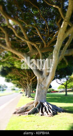 The National Memorial Cemetery of the Pacific Honolulu, Hawaii - Stock Photo