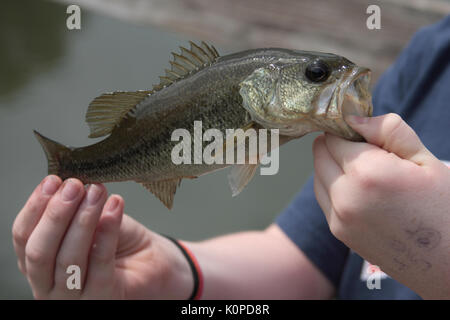 Just caught fish in man's hand - Stock Photo