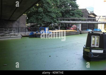 London, UK 25th August 2017. Little Venice Canal is covered in Algae after the recent warm weather.If the algae - Stock Photo