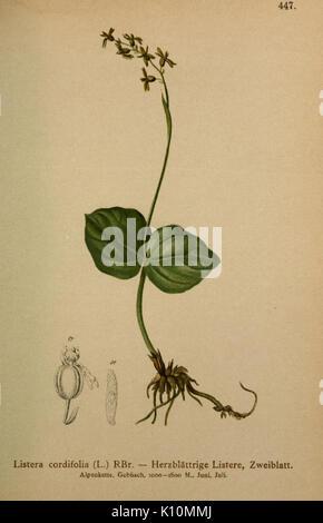 Atlas der Alpenflora (10424394244) - Stock Photo