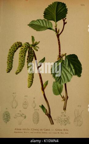 Atlas der Alpenflora (10424371235) - Stock Photo