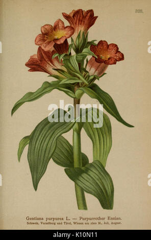 Atlas der Alpenflora (10192523366) - Stock Photo