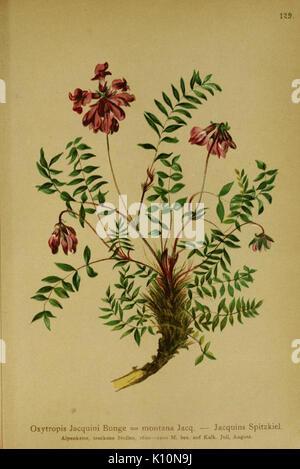 Atlas der Alpenflora (10055495603) - Stock Photo