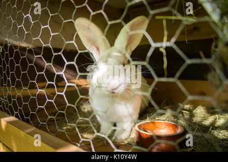 domestic rabbit straw bedding in hutch bunny kit kitten