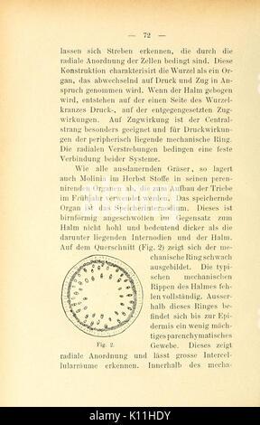 Berichte der Schweizerischen Botanischen Gesellschaft = (Page 72) BHL4495500 - Stock Photo
