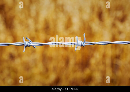 Single strand of barbed wire centrally in the landscape format frame with a golden background of defocussed rye - Stock Photo