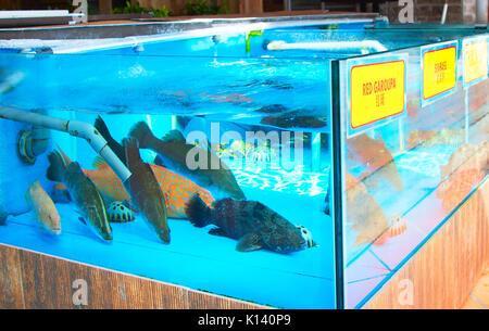 Lots of live fish in aquarium at seafood restaurant - Stock Photo