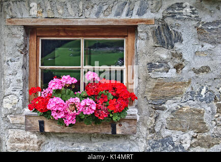Wall of an old farm house made of field stones with window and bright red flowers - Stock Photo