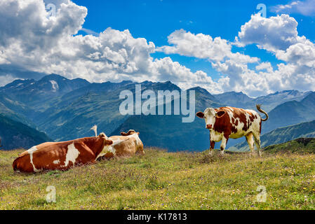 Alp Cows on the pasture - Stock Photo