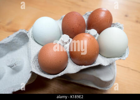 Six fresh free range egss multicoloured or multicolored in two rows in a cardboard egg box on a farmers kitchen - Stock Photo